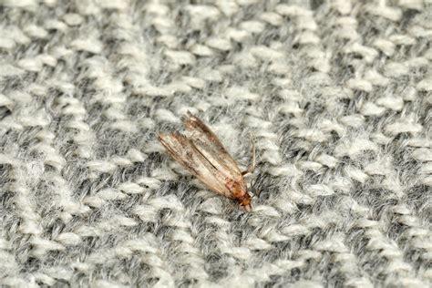 Clothes Moths Pest Control Infestation ca