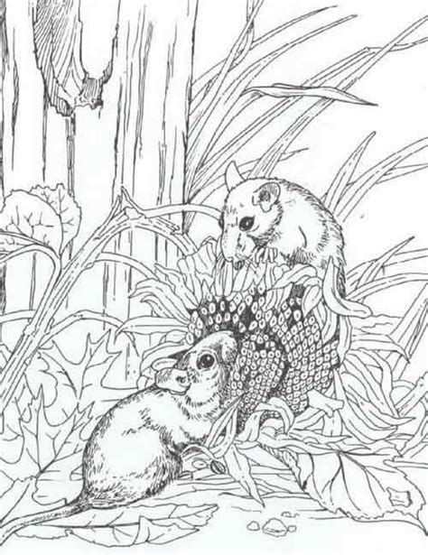 Coloring Pages Featured Printable Pages
