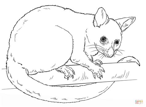 Common Brushtail Possum coloring page Free Printable