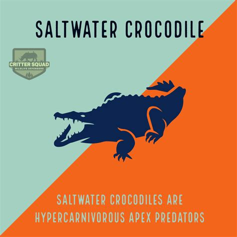 Crocodile Basic Facts About Crocodiles Defenders of