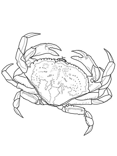 Crustacean coloring pages Free Coloring Pages