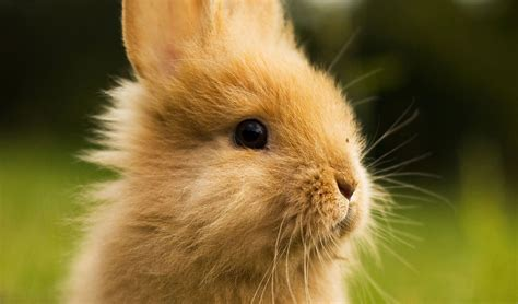 Cute Bunny Photos Rabbit Pictures
