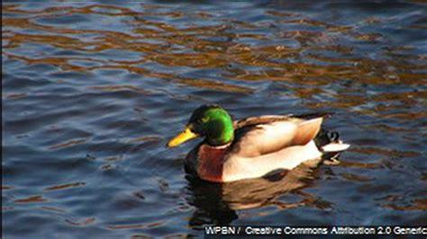 DNR Waterfowl Michigan