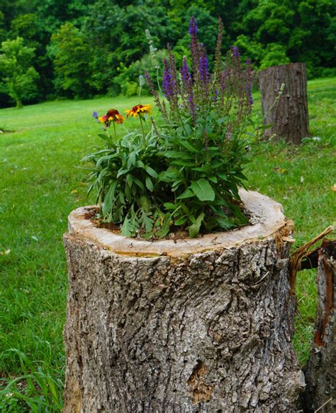 Decorative Uses for Tree Stumps Garden Guides