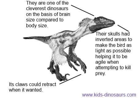 Deinonychus Facts for Kids Interesting Dinosaur Information