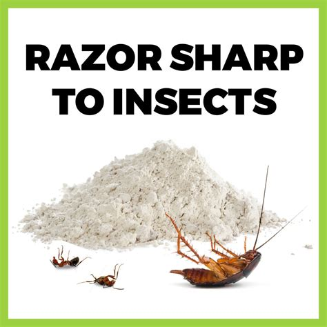 Diatomaceous Earth Buy Diatomaceous Earth For Fleas Bed