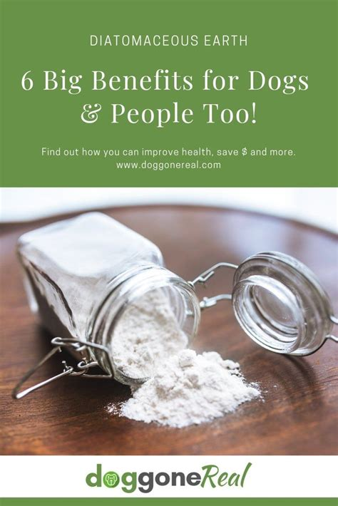 Diatomaceous Earth and Dogs LowchensAustralia