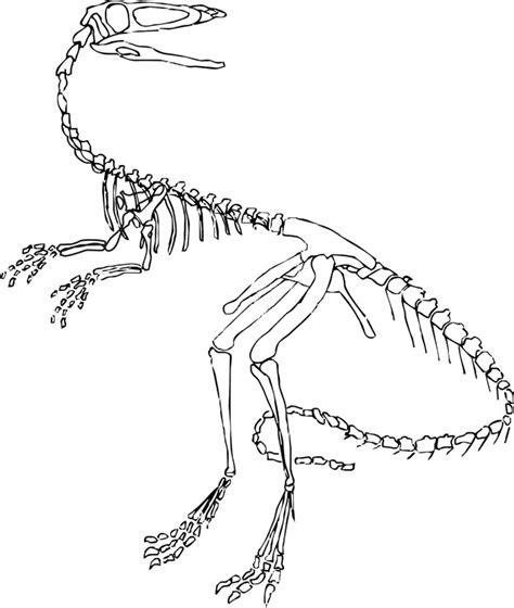 Dinosaur Coloring Pages Fossils Facts and Finds