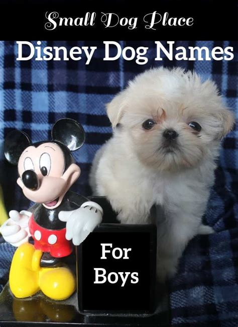 Disney Dog Names for Boys Small Dog Place