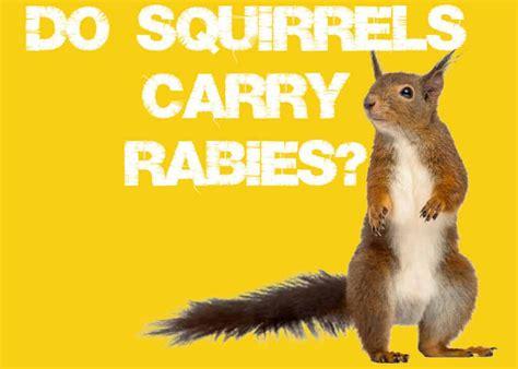 Do Squirrel Carry Rabies SquirrelNutrition