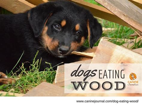 Dog Eating Wood How To Make It Stop CanineJournal