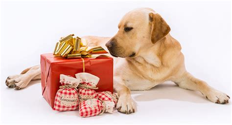 Dog Gifts for People McCartneysDogs