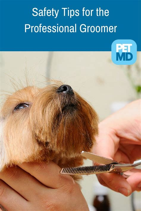 Dog Grooming Guide Tips on Trimmers Technique