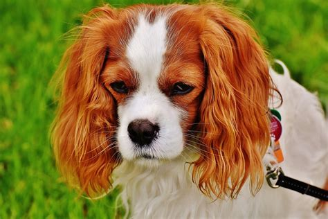 Dogs Good With Children Small Dog Place