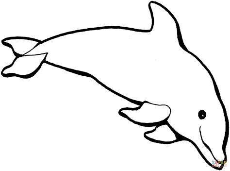 Dolphin Coloring Pages Dolphinkind