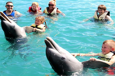 Dolphin Swim Dolphin Encounters