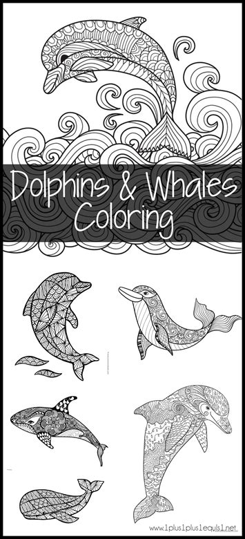 Dolphins and Whales Coloring Pages 1 1 1 1 Never