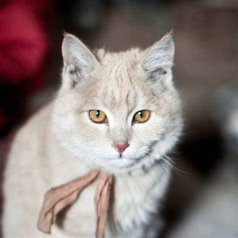 Domestic Cat National Geographic