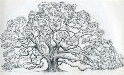 Draw An Oak Tree Easy Drawings And Sketches