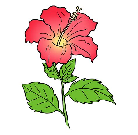 Draw a Cartoon Hibiscus Flower Pinterest
