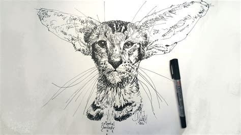 Drawing in Pen and Ink Techniques for Pen Drawing How