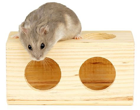 Dwarf Hamster Care How to Take Care of Your Dwarf Hamster