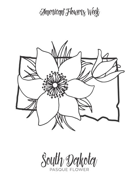 Eastern Pasque Flower coloring page Free Printable