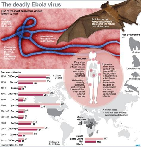 Ebola Virus Symptoms Pictures Structure facts and