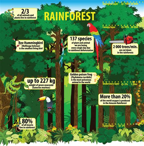Eco Facts Rainforest Information for Kids