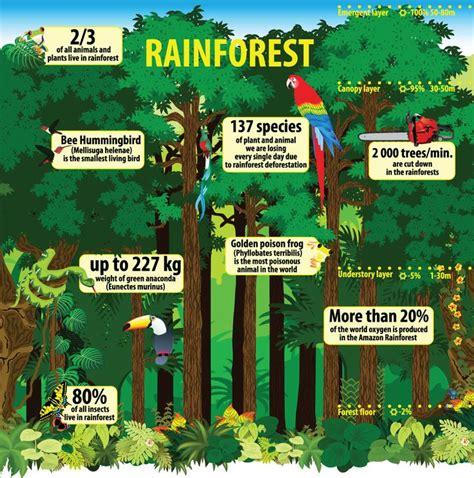Eco Facts Rainforest Information for Kids Mongabay