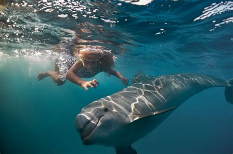 Education on Dolphins and on How to Swim with Wild