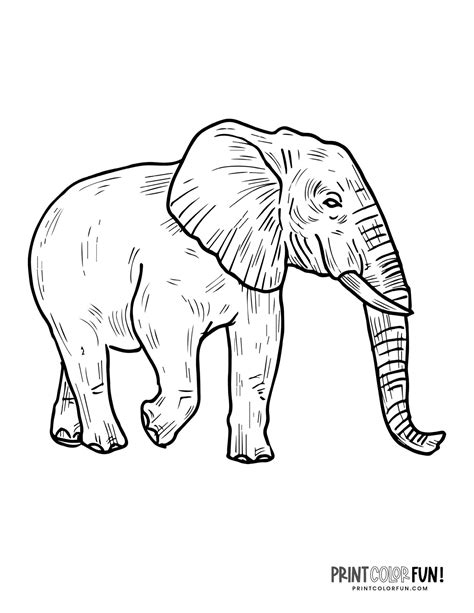 Elephant Coloring Pages Printables Education