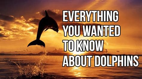 Everything You Wanted To Know About Dolphins In5D