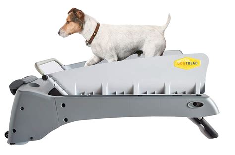 Exercise With a Dog Treadmill Precision K9 Dog Training