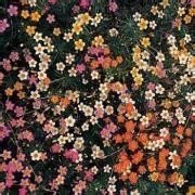 Fast Growing Flowering Ground Cover Plant Seed Shake n Seed