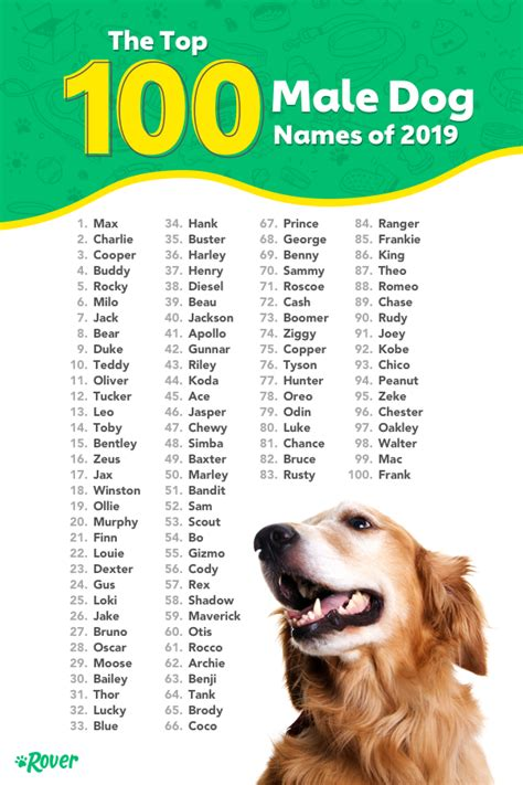Favorite Puppy Names