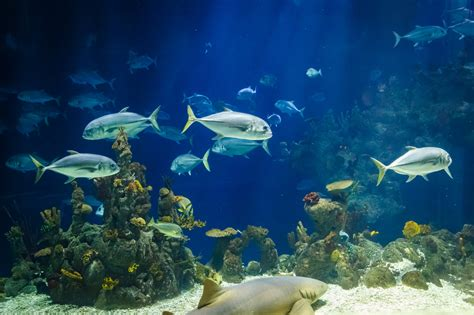 Fish images free stock photos download 899 Free stock