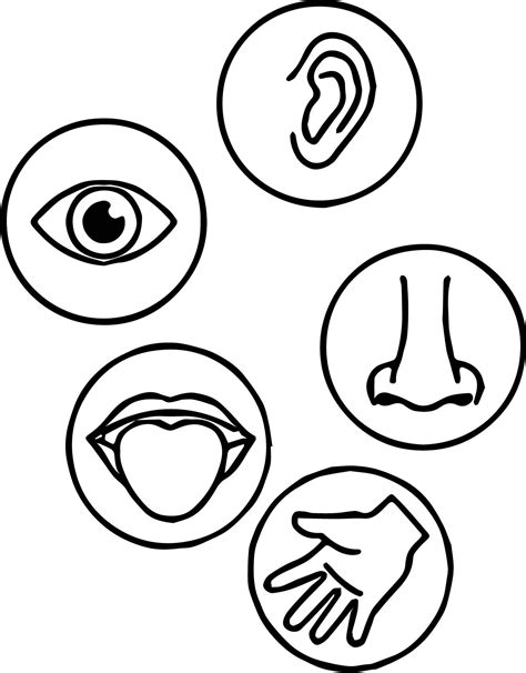 Five Senses Coloring Pages gotyourhandsfull