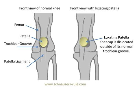 Floating Kneecaps or Luxating Patella in Dogs Mercola