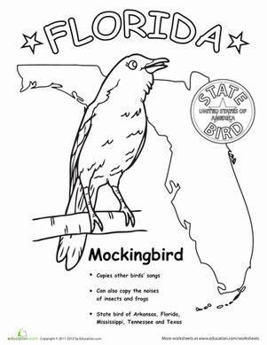 Florida State Bird Mockingbird Coloring Page State of FL