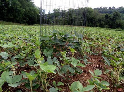 Food Plots For Deer and Turkey Simple Easy and