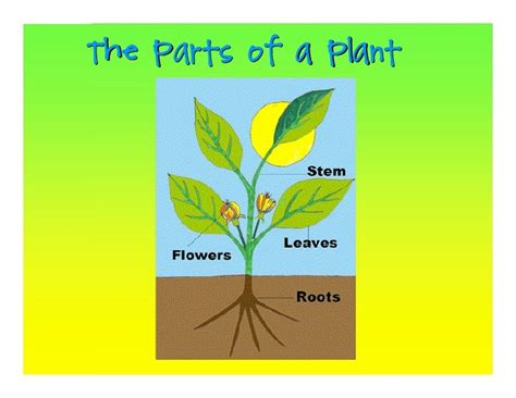 Free PowerPoint Presentations about Parts of a Plant for