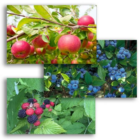 Fruit Tree Discounts
