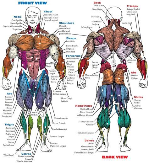 Full Body Muscle Diagram