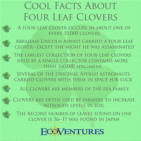 Fun Facts About Four Leaf Clovers for St Patrick s Day