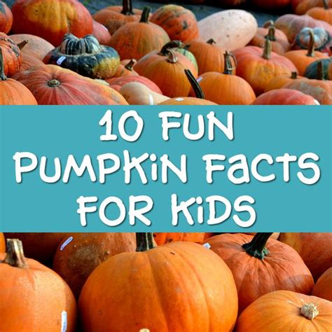 Fun Pumpkin Facts for Kids Interesting Information about