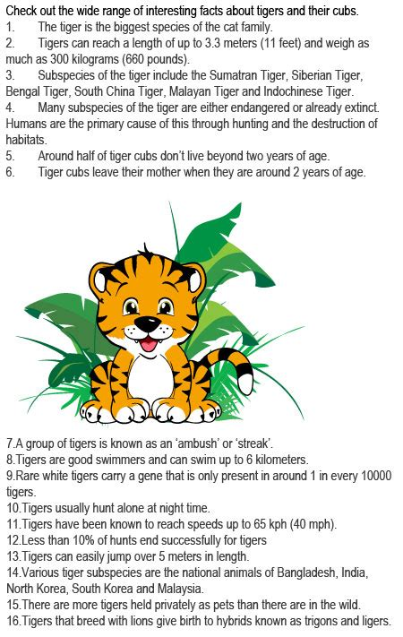 Fun Tiger Facts for Kids Kids Play and Create Tigers