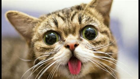 Funny Cat Videos Funny Cats