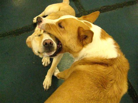 Funny Dog Videos FunnyDogSite