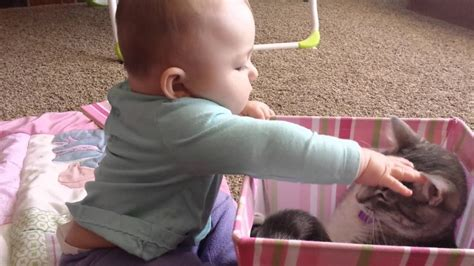 Funny Videos Funny Video Clips and FunnyPlace